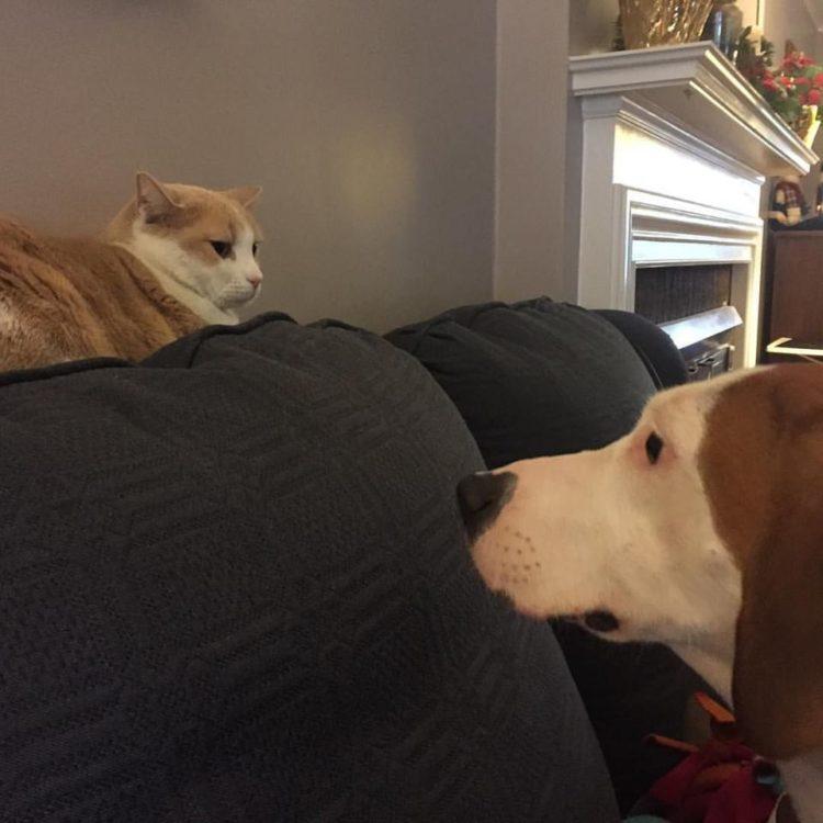 perro-amor-gato9