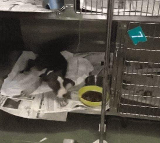 perro-atrapado-en-drenaje-6