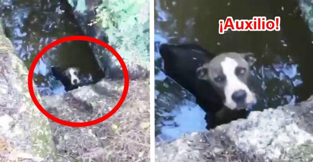 perro-atrapado-en-drenaje-id