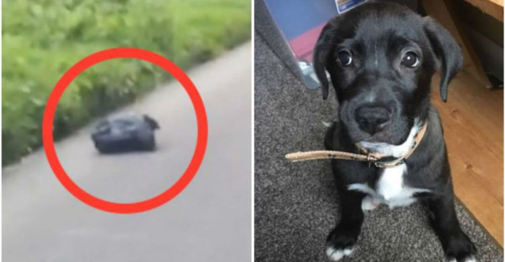 perro-carretera-bolsa-rescatado