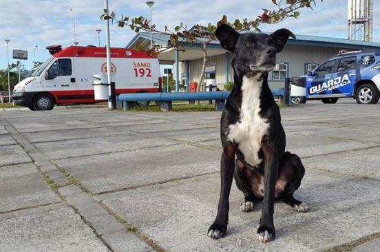 perro-leal-1