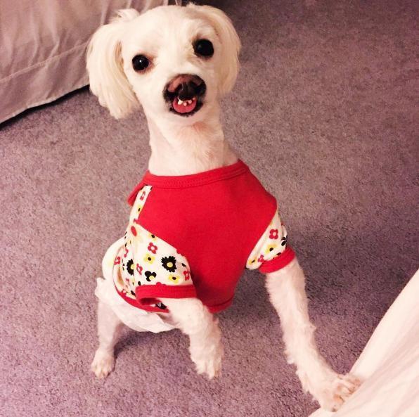 perro-sonrisa-graciosa-10