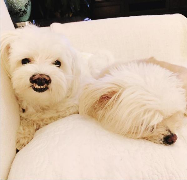 perro-sonrisa-graciosa-12