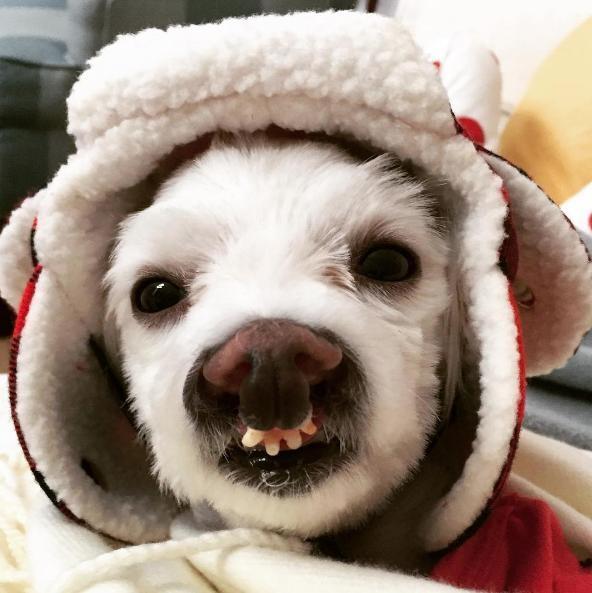 perro-sonrisa-graciosa-13