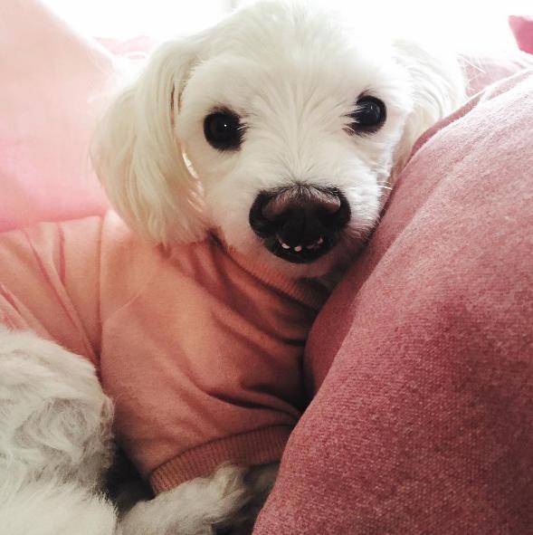perro-sonrisa-graciosa-14