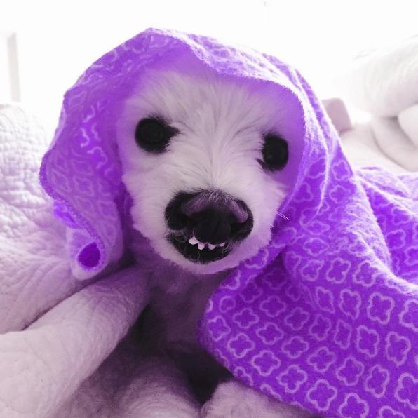 perro-sonrisa-graciosa-9