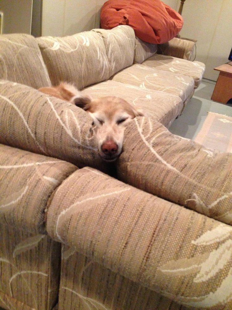 perros-comodos-10