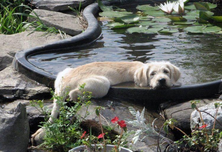 perros-comodos-15