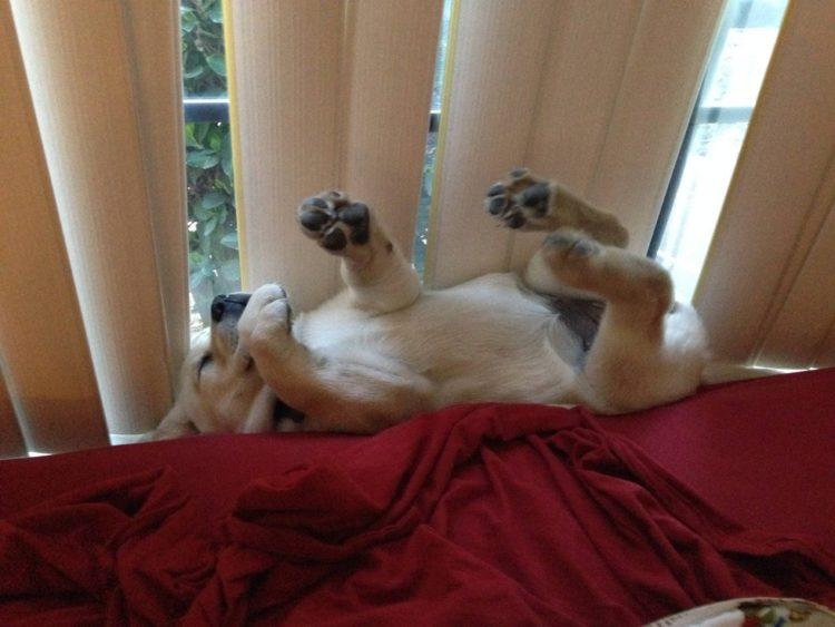 perros-comodos-16