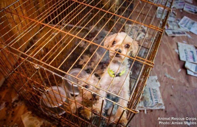 perros-libres5