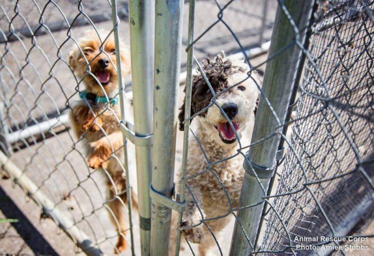 perros-libres7