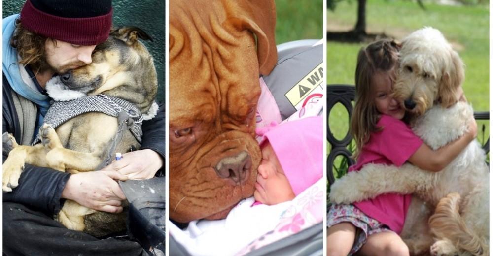 perros-mejores-amigos-fotos-historias
