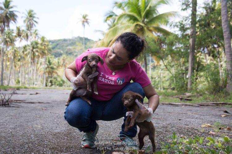 perros-puerto-rico10