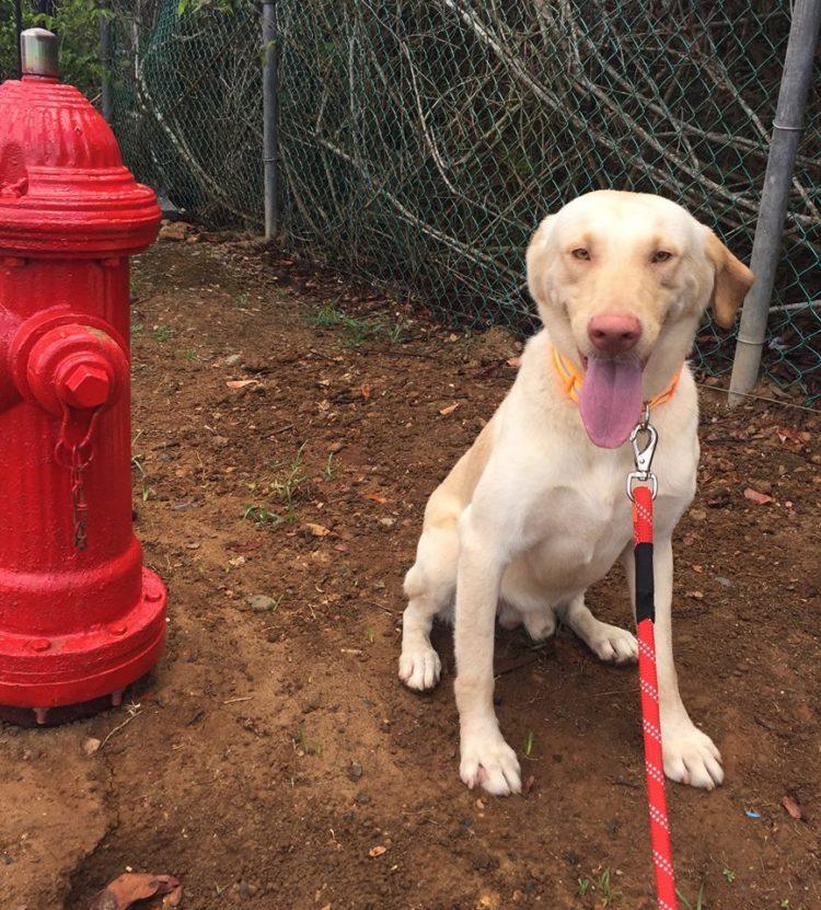 perros-puerto-rico7