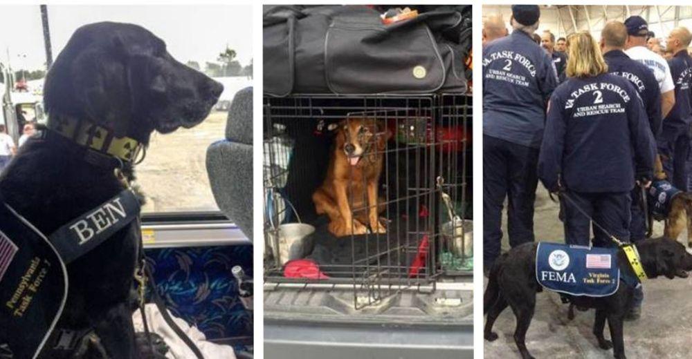 perros-rescate-huracan-id