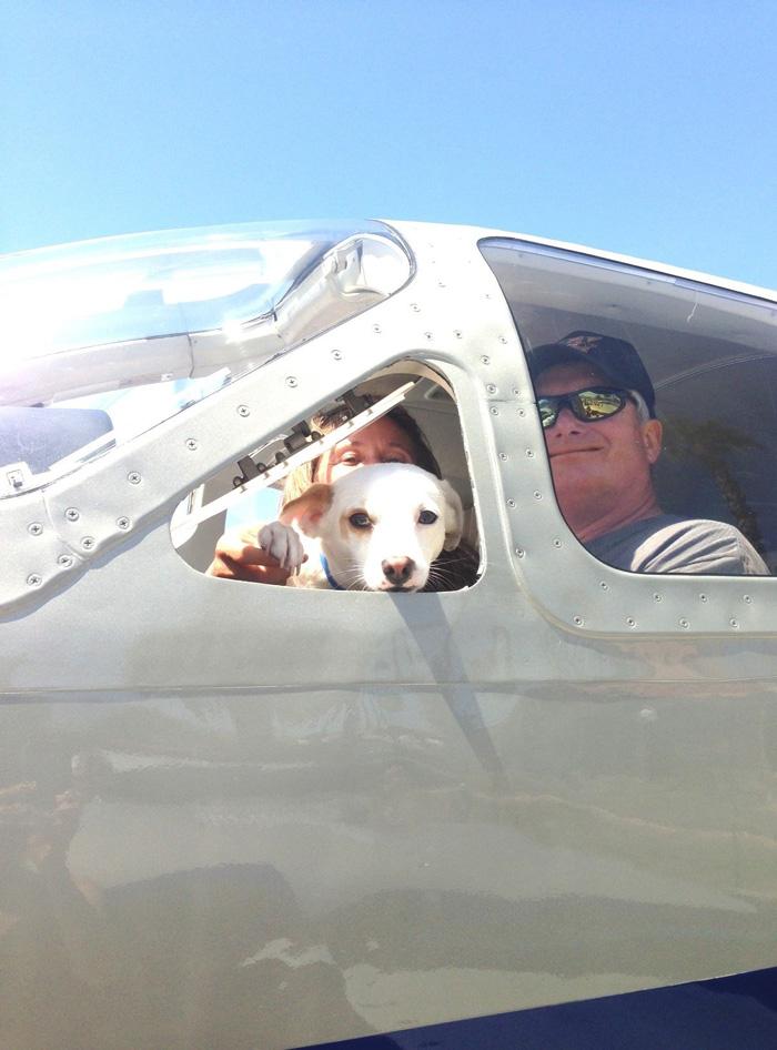 pilotos-voluntarios-salvan-perros-1