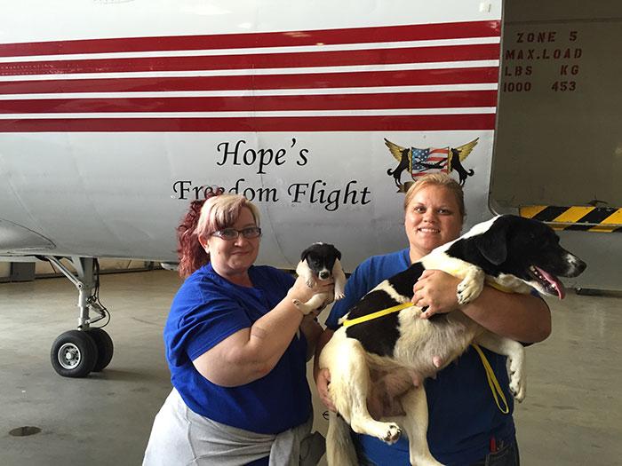 pilotos-voluntarios-salvan-perros-11
