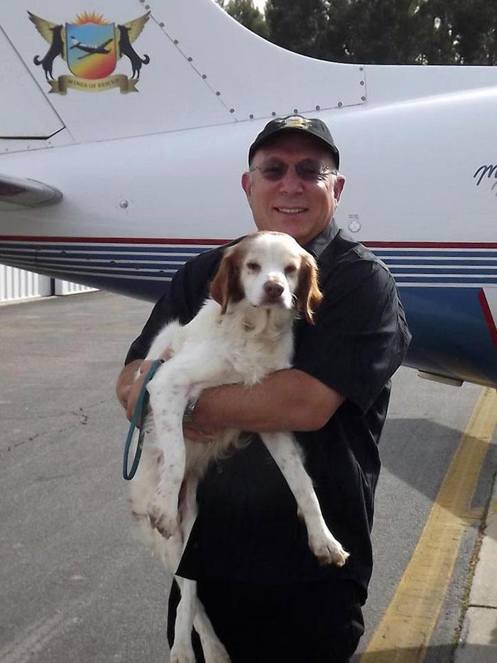 pilotos-voluntarios-salvan-perros-12
