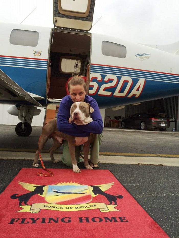 pilotos-voluntarios-salvan-perros-15