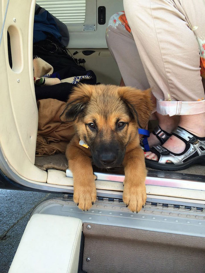 pilotos-voluntarios-salvan-perros-3