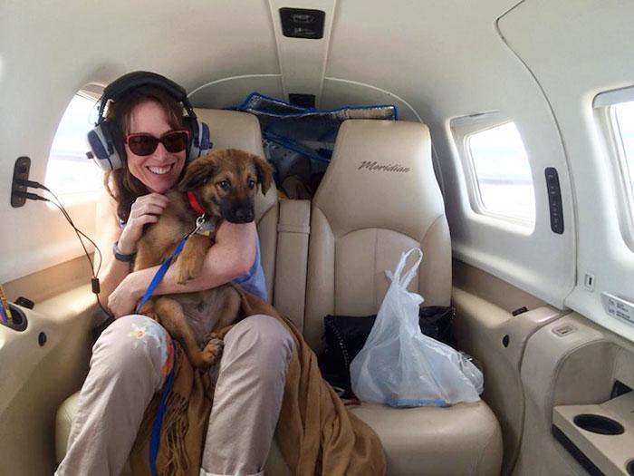 pilotos-voluntarios-salvan-perros-4
