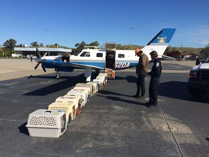 pilotos-voluntarios-salvan-perros-5