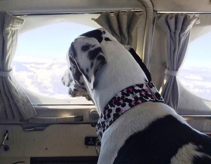 pilotos-voluntarios-salvan-perros-6