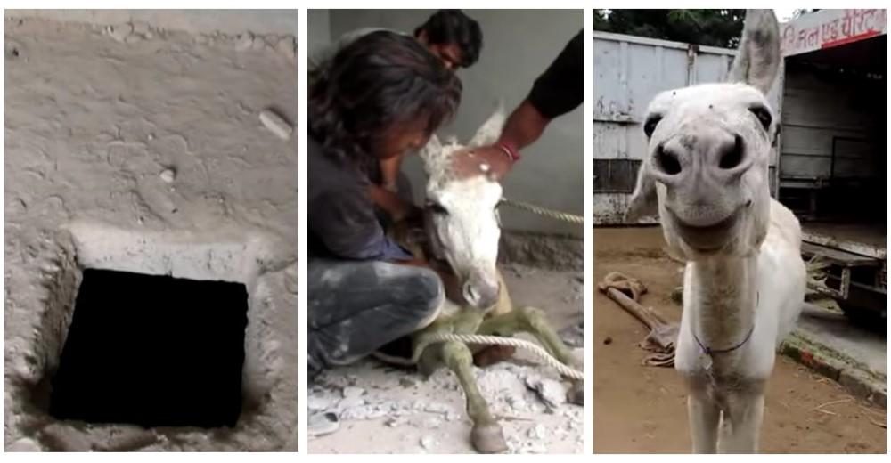rescate-de-burro-pozo-septico-india