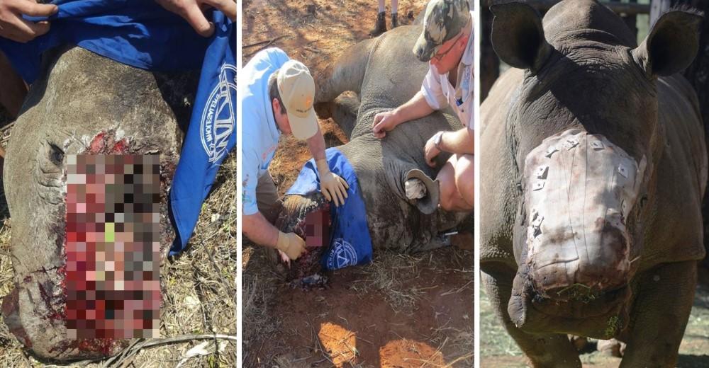 rinoceronte-sobreviviente-masacre-cuerno