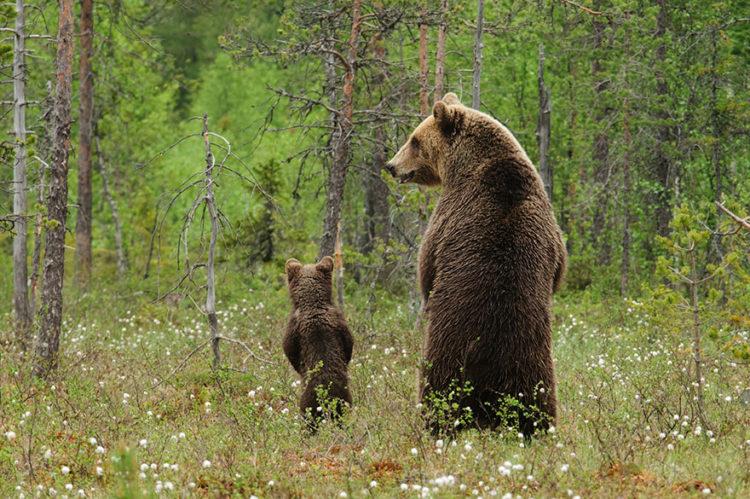 tiernos-osos-12