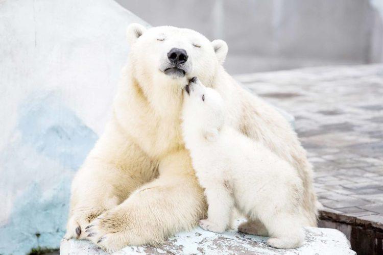 tiernos-osos-15