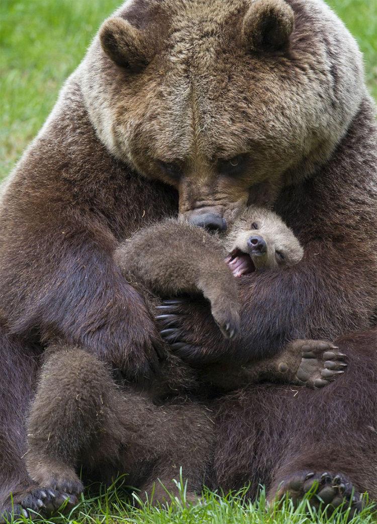 tiernos-osos-3