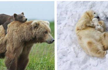 tiernos-osos-id
