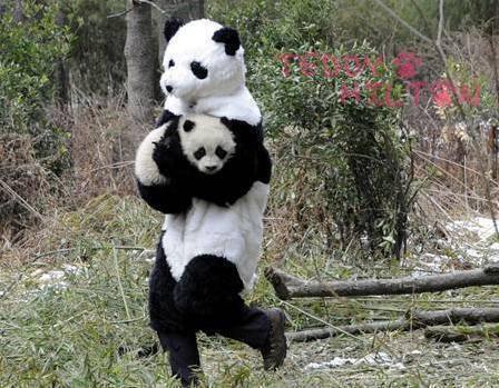 tiernos-pandas-10