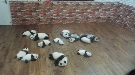 tiernos-pandas-2