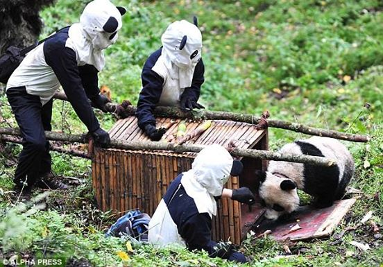 tiernos-pandas-9