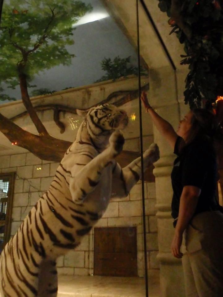 tigres-acuario-houston-1
