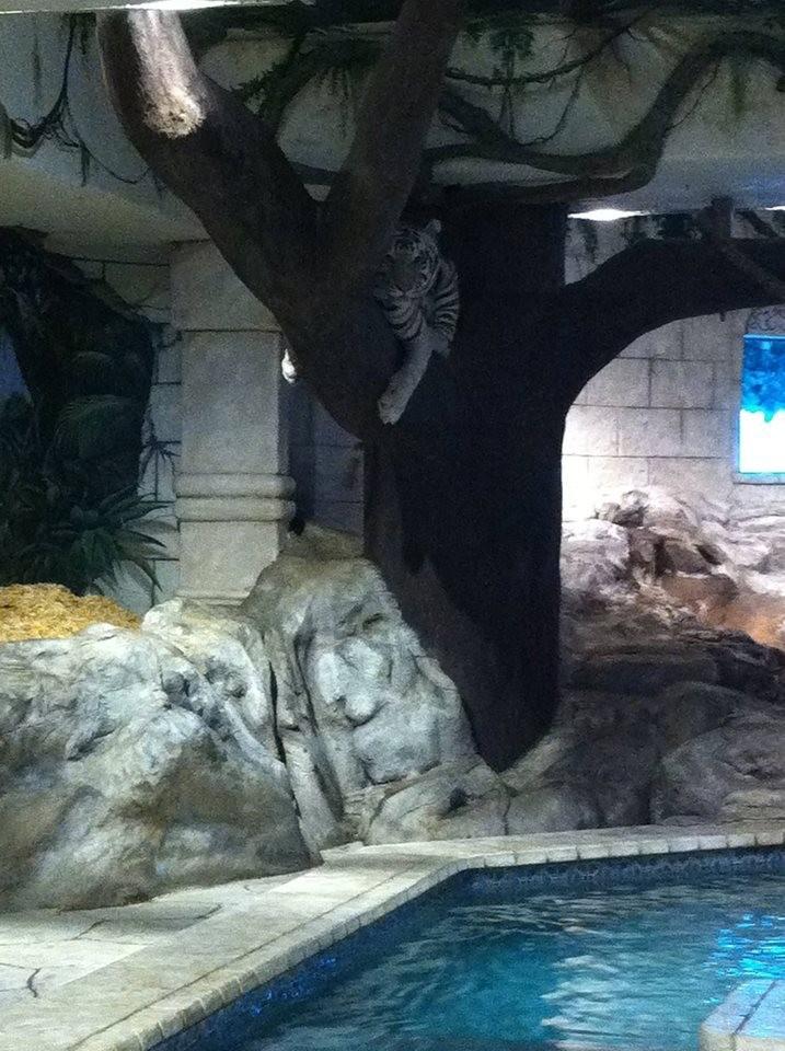 tigres-acuario-houston-2