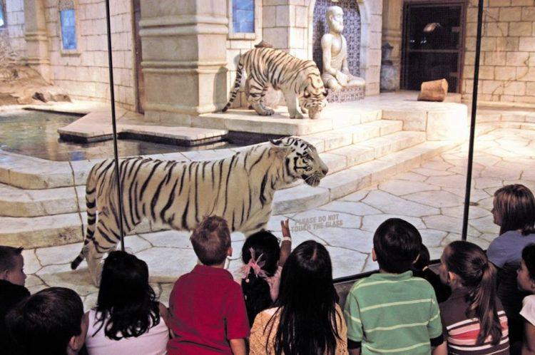 tigres-acuario-houston-4