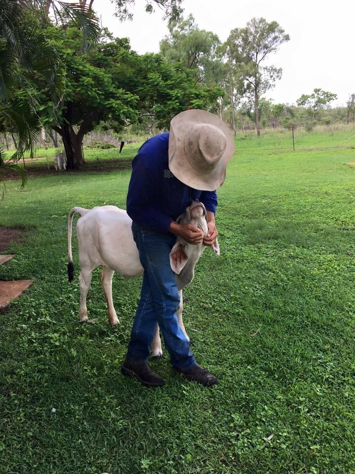 vaca-irrumpe-en-hogar-12