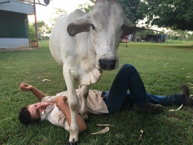 vaca-irrumpe-en-hogar-9