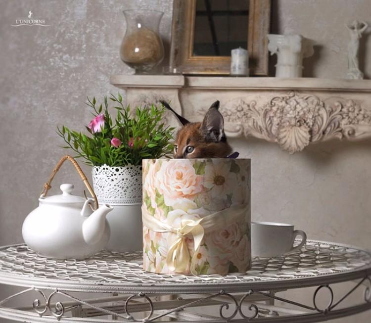 caracales-felinos-hermosos-03