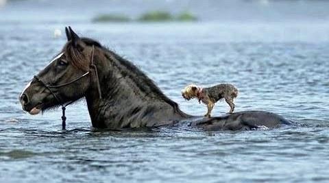 delfines-en-las-ballenas-y-otros-animales-que-montan-animales-1-12