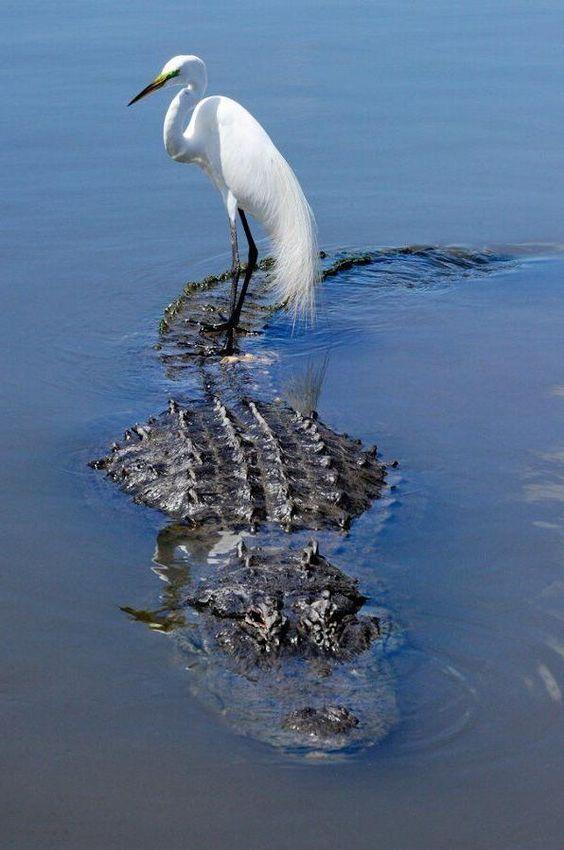 delfines-en-las-ballenas-y-otros-animales-que-montan-animales-14