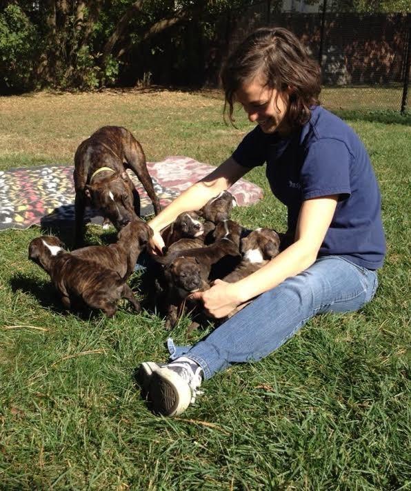 desgaste-por-compasion-aman-tanto-a-los-animales-que-duele-y-afecta-su-vida-4