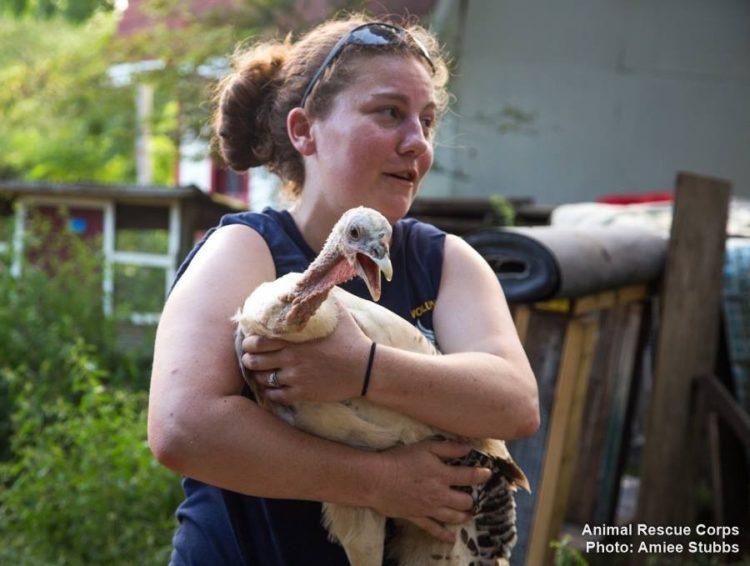 desgaste-por-compasion-aman-tanto-a-los-animales-que-duele-y-afecta-su-vida-6