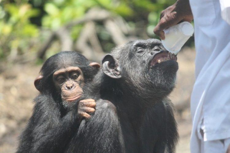 desgaste-por-compasion-aman-tanto-a-los-animales-que-duele-y-afecta-su-vida-8
