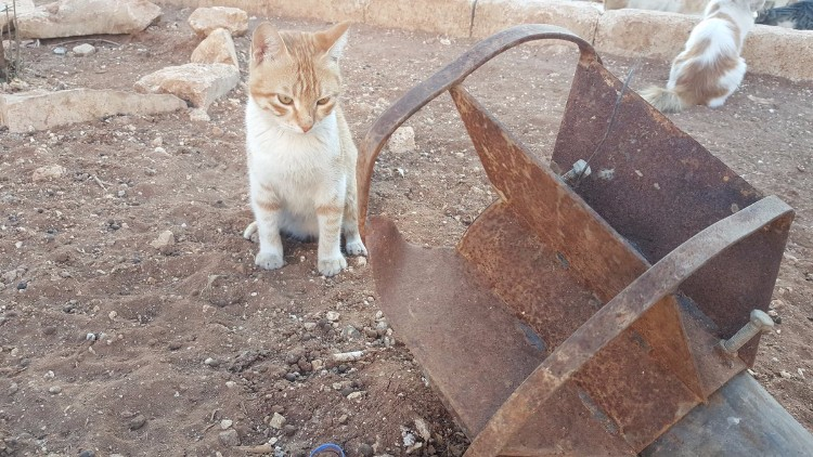 destruyen-alepo-refugio-gatos-02