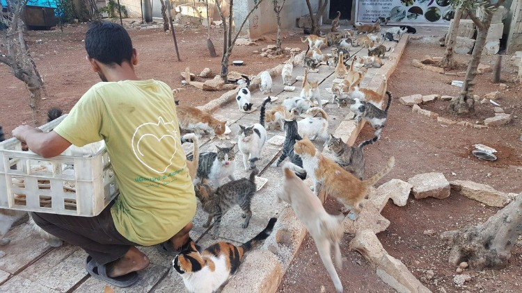 destruyen-alepo-refugio-gatos-03
