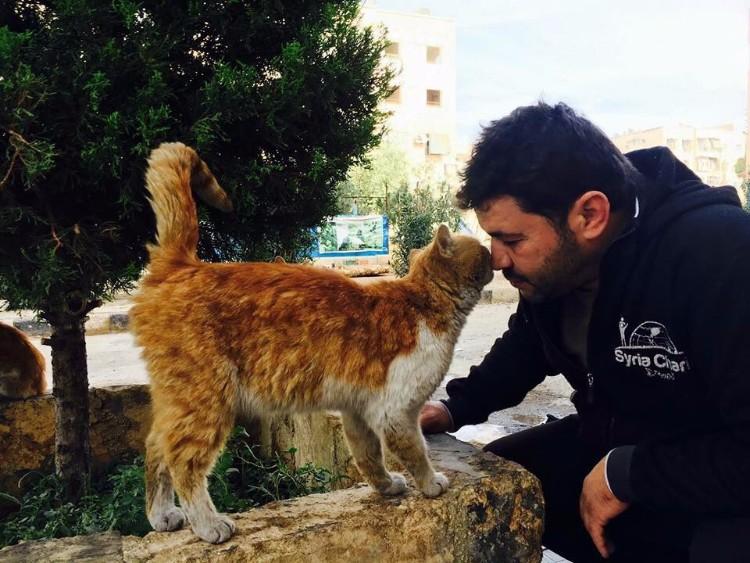destruyen-alepo-refugio-gatos-14